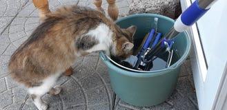 De Uriouskat gluurt in een emmer in de tuin Een mooi grijs-wit gestreept huisdier die zich op zijn achterste benen bevinden katte stock afbeeldingen