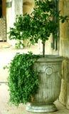 De Urn van de tuin Royalty-vrije Stock Afbeeldingen