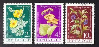 DE USSR - CIRCA 1979: een reeks zegels in de USSR worden gedrukt, toont geneeskrachtige installaties, CIRCA 1979 die Royalty-vrije Stock Fotografie