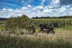 De V.S. - Ohio - Amish royalty-vrije stock foto
