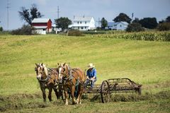 De V.S. - Ohio - Amish stock fotografie