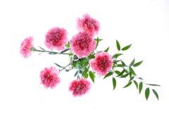 De vaas van de bloem Stock Afbeelding