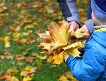 De vader en de zoon verzamelen esdoornbladeren Royalty-vrije Stock Foto