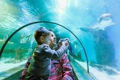 De vader en de zoon bekijken de vissen in het aquarium Royalty-vrije Stock Foto