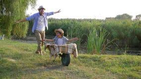 De vader en de zoon hebben pret met omhoog handen, ouderkietelende gevoelens weinig jongenszitting in een kruiwagen bij dorp stock footage