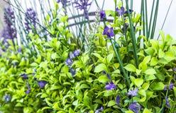 De vage achtergrond van het bloemengras in zachte nadruk in zacht groene en violette /purple-kleur stock afbeelding