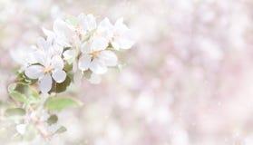 De vage witte en roze achtergrond van de de Lenteaard stock foto