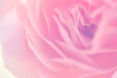 De vage zoete kleur nam in zachte kleur toe Royalty-vrije Stock Afbeeldingen