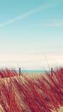 De Vakantie Tropisch Landschap van het duinenstrand Stock Fotografie