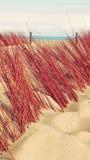 De Vakantie Tropisch Landschap van het duinenstrand Royalty-vrije Stock Afbeelding