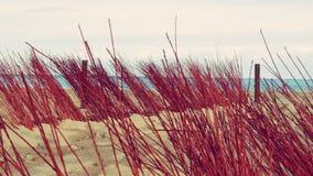 De Vakantie Tropisch Landschap van het duinenstrand Royalty-vrije Stock Foto's