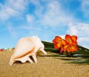 De vakantie van de zomer met zeeschelp over blauwe hemel Stock Foto