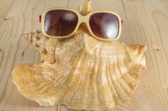 De vakantie van het strand Zonnebril, overzeese shell op houten achtergrond Royalty-vrije Stock Afbeelding