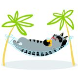 De vakantie van de zomer Kat die in hangmat liggen Katachtige grappige karakterwi Stock Afbeeldingen
