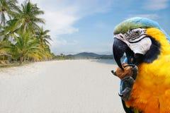 De vakanties van de zomer Royalty-vrije Stock Fotografie