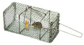 De val van de muis royalty-vrije stock fotografie