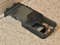 De val van de muis Stock Fotografie