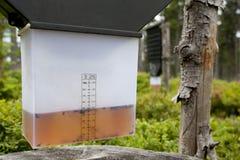 De val van het insect in bos Royalty-vrije Stock Afbeeldingen