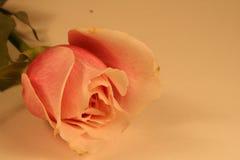 De valentijnskaart nam Grens toe stock afbeelding