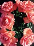 De valentijnskaarten houden rozen van roze amore Stock Fotografie