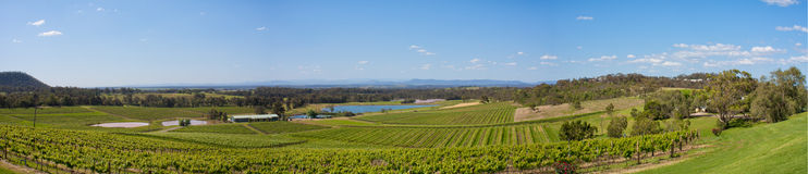 De Vallei Australië, het panorama van de jager van Wijngaarden Stock Foto