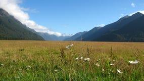 De vallei, Nieuw Zeeland Stock Afbeeldingen