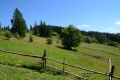 De vallei van de berg Zonnige dag in Bergen Gras rond hemel een paar bomen Royalty-vrije Stock Fotografie