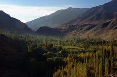 De vallei van bomen royalty-vrije stock afbeelding