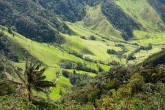 De Vallei van Cocora, Natuurreservaat van Colombia Royalty-vrije Stock Afbeelding