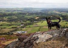 De Vallei van Conwy en een hond Stock Foto