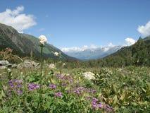 De vallei van de berg Stock Foto's