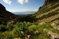 De vallei van de berg in de zomerdag Stock Afbeeldingen