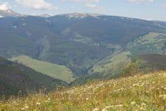 De Vallei van de de Zomerberg van Colorado royalty-vrije stock afbeeldingen