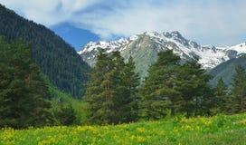 De vallei van de Kaukasus Stock Afbeelding