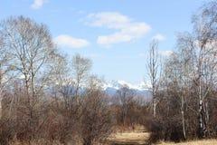 De Vallei van de lente Stock Afbeeldingen