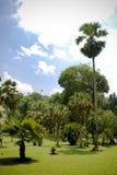 De Vallei van de palm Royalty-vrije Stock Foto