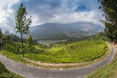 De vallei van de theeaanplanting Royalty-vrije Stock Fotografie