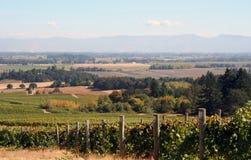 De Vallei van de Wijngaard van de herfst Stock Afbeeldingen