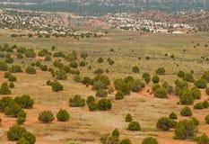 De vallei van de woestijn die met jeneverbessenbomen wordt beslagen Royalty-vrije Stock Foto