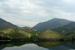De vallei van Duoro, Portugal Stock Foto