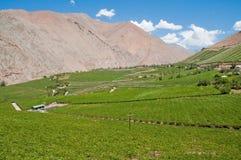 De vallei van Elqui, Chili Stock Fotografie