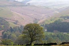 De vallei van Goyt Stock Fotografie