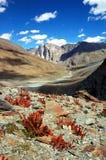 De vallei van Himalayan royalty-vrije stock foto