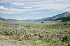 De vallei van Lamar bij yellowstone nationaal park stock foto's
