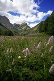 De vallei van Maira Stock Foto