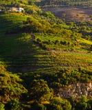 De vallei van rivierdouro, Portugal Royalty-vrije Stock Afbeelding