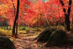 De vallei van rode herfstbladeren Stock Afbeeldingen