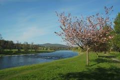 De vallei van Spey in de lente Royalty-vrije Stock Afbeelding