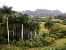 De vallei van Vinales, Cuba Stock Foto