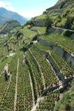 De Vallei van Wallis is grootste de wijnproducent van Switzerlands met royalty-vrije stock foto